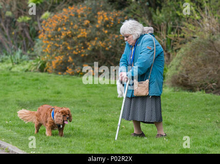 Elderly woman with a walking stick and wearing a coat,walking a dog in a park on a cold day in Spring the UK. - Stock Photo