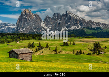 Alpe di Siusi - Seiser Alm with Sassolungo - Langkofel mountain group in the background, Trentino Alto Adige - South Tyrol, Italy - Stock Photo