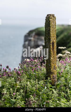 Bempton Cliffs in June 2018 - Stock Photo