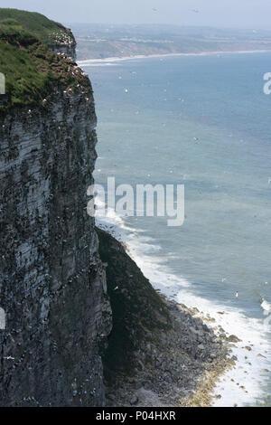 Seabirds nest at Bempton Cliffs in June 2018 - Stock Photo