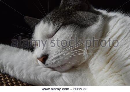 Tabby Cat Back of Head - Stock Photo