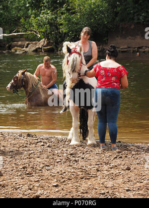 travellers swimming their horses after washing them in the River Eden, Appleby-in Westmorland at the annual Appleby Horsefair, Cumbria, England UK, 8 June, 2018. washing horses in River Eden Credit: Steve Holroyd/Alamy Live News - Stock Photo