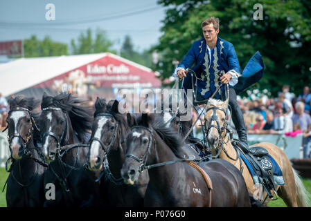 A rider from the Atkinson Action Horses stands on the back of two horses and controls four more horses while they gallop around the showground thrilling the crowd at the South Of England Show in Ardingly, Sussex, UK. - Stock Photo