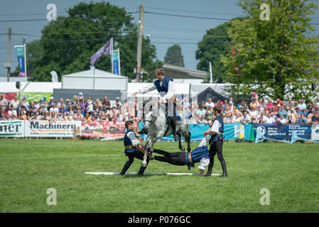 While riding a horse, a rider from the Atkinson Action Horses jumps over a man during a performance at the South Of England Show in Ardingly, Sussex, UK. - Stock Photo
