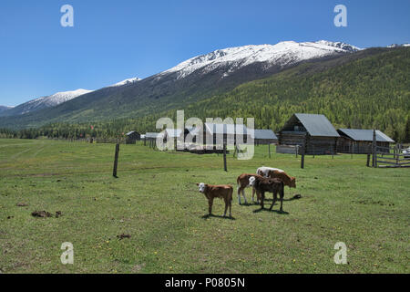 Idyllic Tuvan village, Kanas Lake National Park, Xinjiang, China - Stock Photo