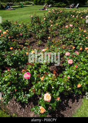 People Relaxing in Sunshine, Queen Mary's Gardens, Rose Garden, Regents Park, London, England, UK, GB. - Stock Photo