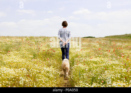 Walking on a summers day through a field of poppies and camomile with a dog nr Guildford Surrey - Stock Photo