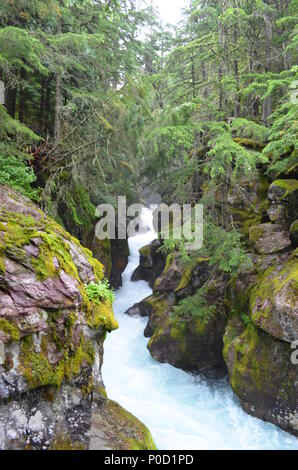 Stream flowing through moss covered rocks through a forest in Glacier National Park, Montana, USA. - Stock Photo