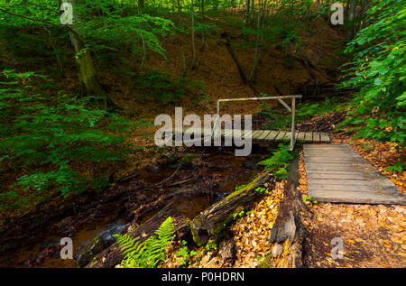 wooden bridge above the forest stream. lovely nature scenery in summer. beautiful ancient beech forest - Stock Photo