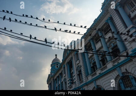 Pigeons on telephone wires against cloudy sky and colonial architecture in Yangon Myanmar - Stock Photo