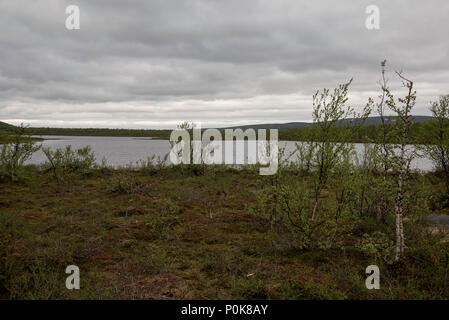 Downy Birches are covering parts of Norways northenmost province Finnmark. - Stock Photo