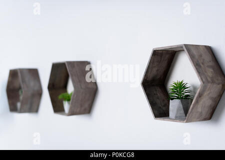 potted green plants on wooden shelves on wall - Stock Photo