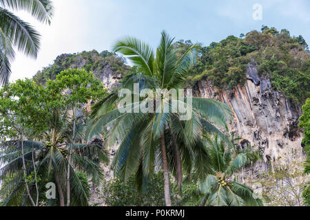 Popular travel tropical karst rocks perfect for climbing, Krabi province, Thailand