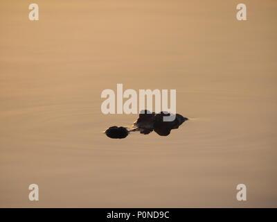 Sunrise on Nine Mile Pond in Everglades National Park, Florida. - Stock Photo