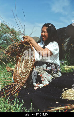 Kashia Pomo , American Indian, woman weaving on 'Gambling tray', using  young willow branches, field, springtime. - Stock Photo
