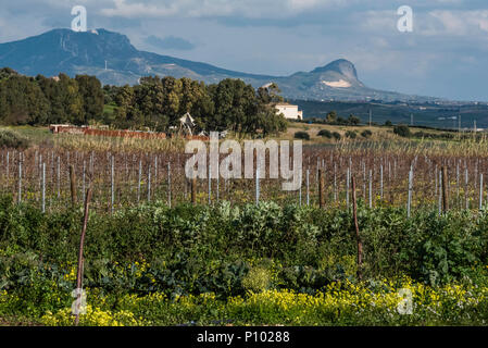 vineyards of Menfi, Sicily, Italy - Stock Photo