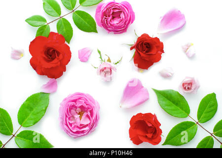 Floral pattern made of pink and red roses, green leaves, branches on white background, Top view, floral pattern, Flowers pattern texture rose petals. - Stock Photo