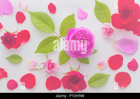 Floral pattern made of pink and red roses, green leaves, branches on white background, Top view, soft color blur style vintage for background. - Stock Photo