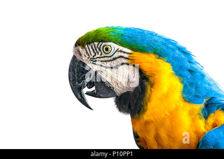 Аra parrot on a white background. - Stock Photo