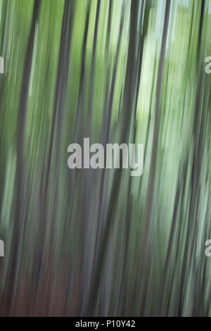 Artistic image of great  mountain wood. Italy, alps. - Stock Photo