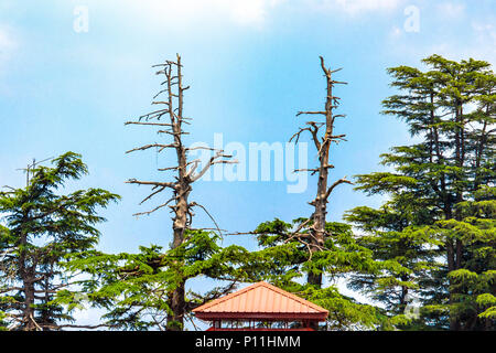 Inside premises of Jakhu temple in Shimla, Himachal Pradesh, India. - Stock Photo