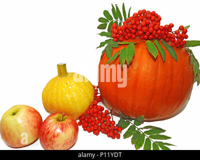 Autumn vegetable composition. Pumpkins decorated with bunch of rowan and apples - Stock Photo