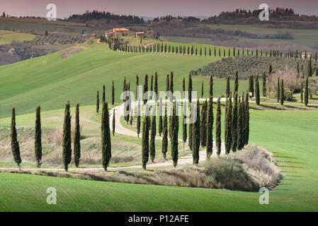Iconic Tuscany landscape with winding road lined with cypress trees and Agriturismo Baccoleno farmhouse in spring, Asciano, Siena, Italy - Stock Photo
