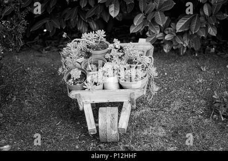 Wooden wheelbarrow with plants in the garden (Pesaro, Italy) - Stock Photo