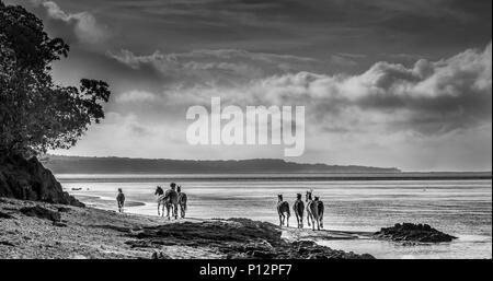 Wild horses running on the beach, Coral Coast, Viti Levu, Fiji - Stock Photo