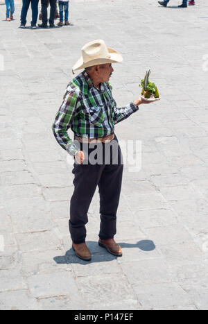 Senior Mexican man offering a cactus plant for sale - Stock Photo