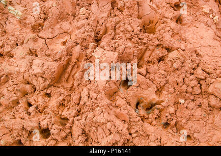 footprint of animals in the soil - Stock Photo