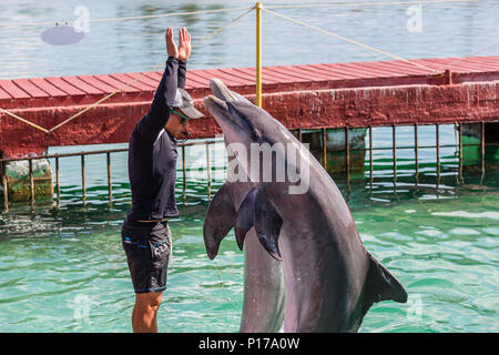 Captive bottlenose dolphins, Tursiops truncatus, performing at a show on Cayo Largo, Cuba. - Stock Photo
