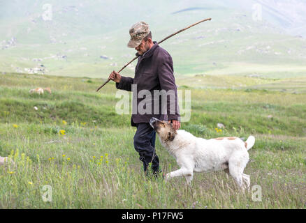 Tatev, Armenia - Jun 2, 2018: Old Armenian sheep herder with his trusty dog begging for pets on a grassy pasture on a sunny day. - Stock Photo