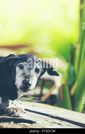 black dog In the shady garden is natural. - Stock Photo