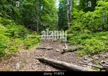 Fallen tree in the middle of the forest - Stock Photo