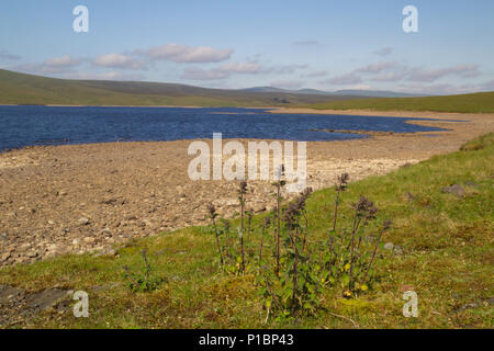 Low water level at Cow Green Reservoir, Upper Teesdale - Stock Photo
