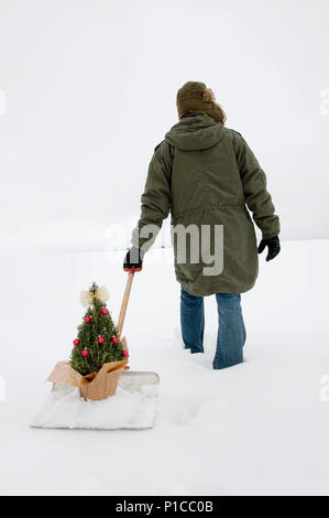 A person trudging through the snow pulling a rosemary bush on a snow shovel behind him through a wintery landscape. - Stock Photo
