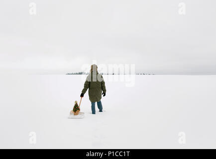 A photograph of a person from behind pulling a rosemary bush behind them on a snow shovel through a wintery landscape. - Stock Photo