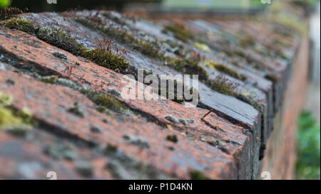 Close up of moss growing on a red and black bricked wall - Stock Photo