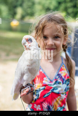 A young girl holding a young bare eyed cockatoo. - Stock Photo