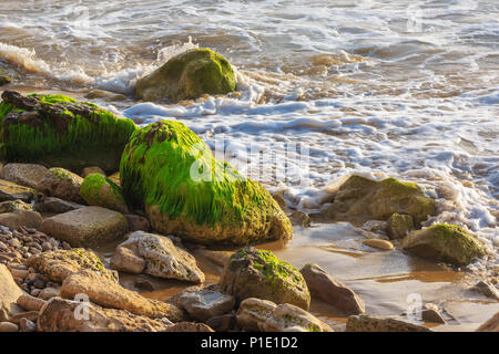 Boulders covered with green algae in sea foam on the shore - Stock Photo