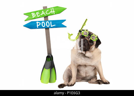 cute smart pug puppy dog sitting down wearing goggles and snorkel, next to signpost with text pool and beach, isolated on white background - Stock Photo