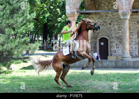 Nis, Serbia - June 10, 2018: Rider on brown jumping horse on meadow in nature. Sport and recreation - Stock Photo