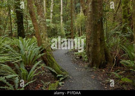 Walking track through Seaward Bush Reserve, Invercargill, Southland, South Island, New Zealand - Stock Photo