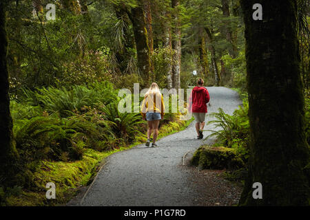 Track to Blue Pools, Mount Aspiring National Park, Haast Pass, near Makarora, Otago, South Island, New Zealand (model released) - Stock Photo