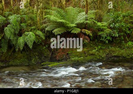 Muir Creek and native bush, Pleasant Flat, Haast Pass, Mt Aspiring National Park, West Coast, South Island, New Zealand - Stock Photo