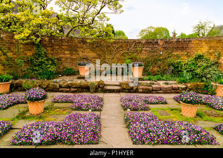 Flagged walled garden corner with purple violas on the ground and in terracotta pots. - Stock Photo