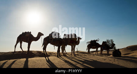 Silhouette of a caravan of camels in sand dunes - South Tunisia - Stock Photo