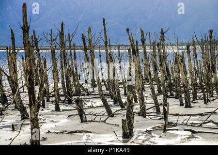 Dead trees on the banks of a lake during the drought, Western Cape, South Africa - Stock Photo
