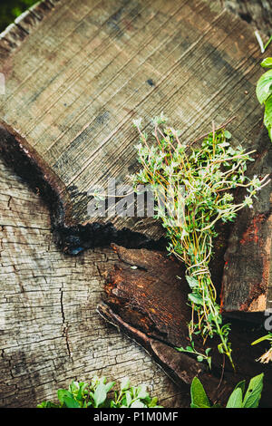 Fresh herbs. Culinary ingredients in rustic setting - Stock Photo